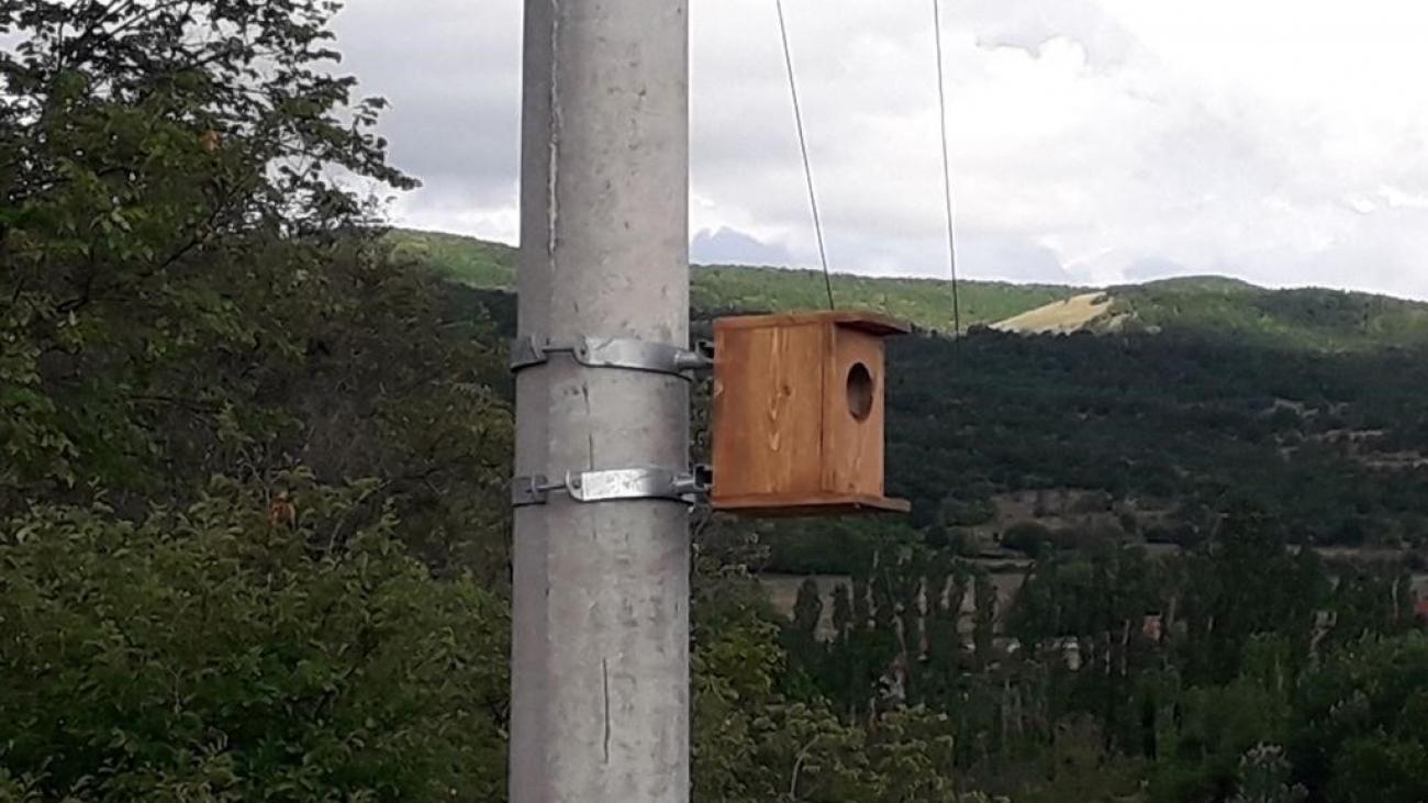 Bucim bird nest